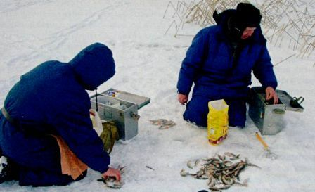 на рыбалке зимой у Питера окунь и плотва на мормышку