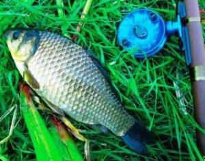 katushka_udacha_fishinglov5