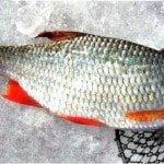 Весенняя рыбалка на красноперку