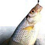 Рыбалка на плотву на Рыбинском водохранилище