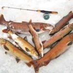 Рыбалка на ускуча и хариуса на озере Маркаколь