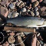Рыбалка на озере Телецкое в Горном Алтае