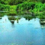 Рыбалка воблером в траве