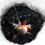 Ловля окуня на балансир в Обском водохранилище