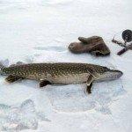 Зимняя рыбалка без мелочи на Гилёвском водохранилище